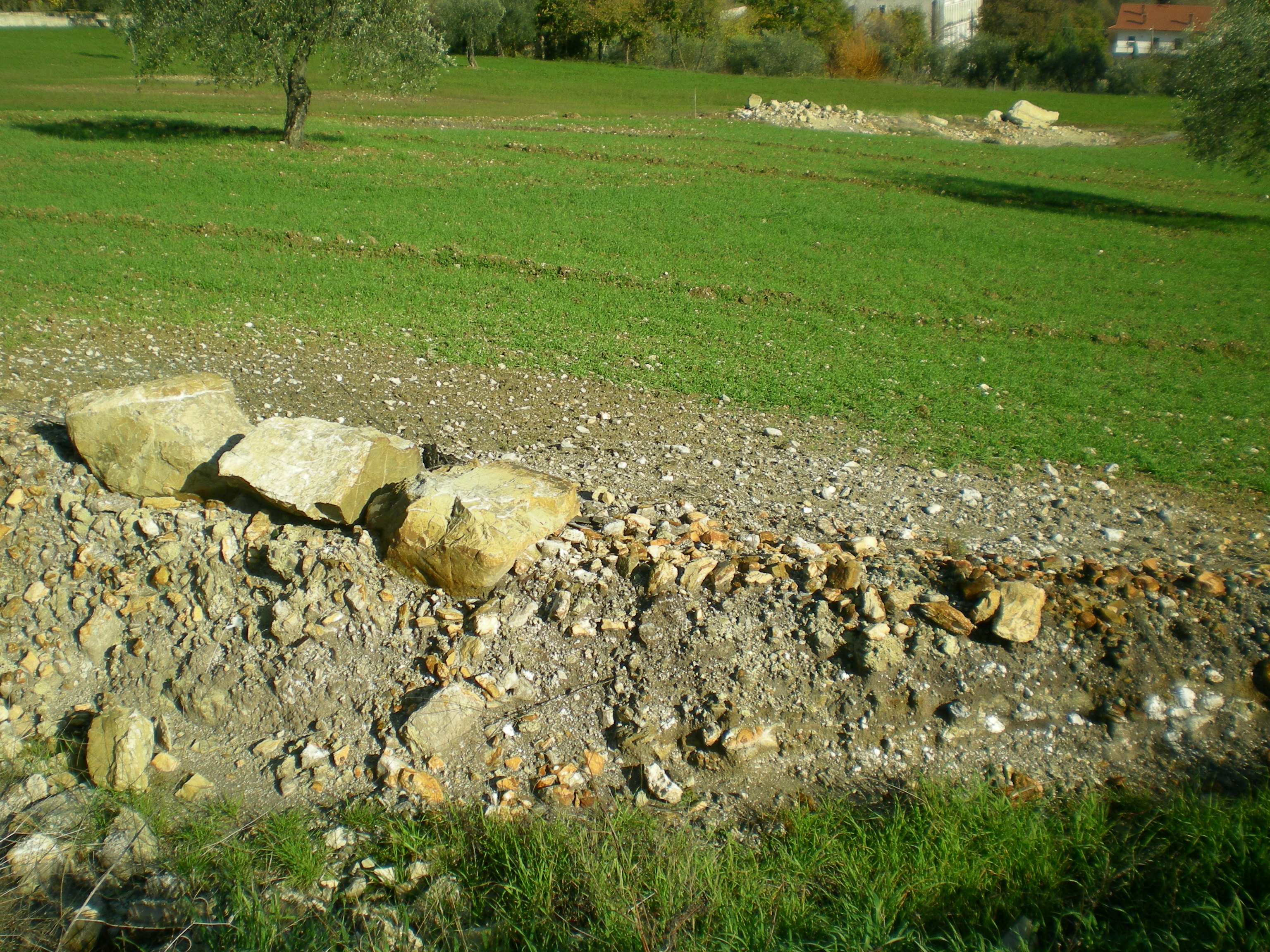 Mofeta sulla provinciale per oliveto (lato destro)
