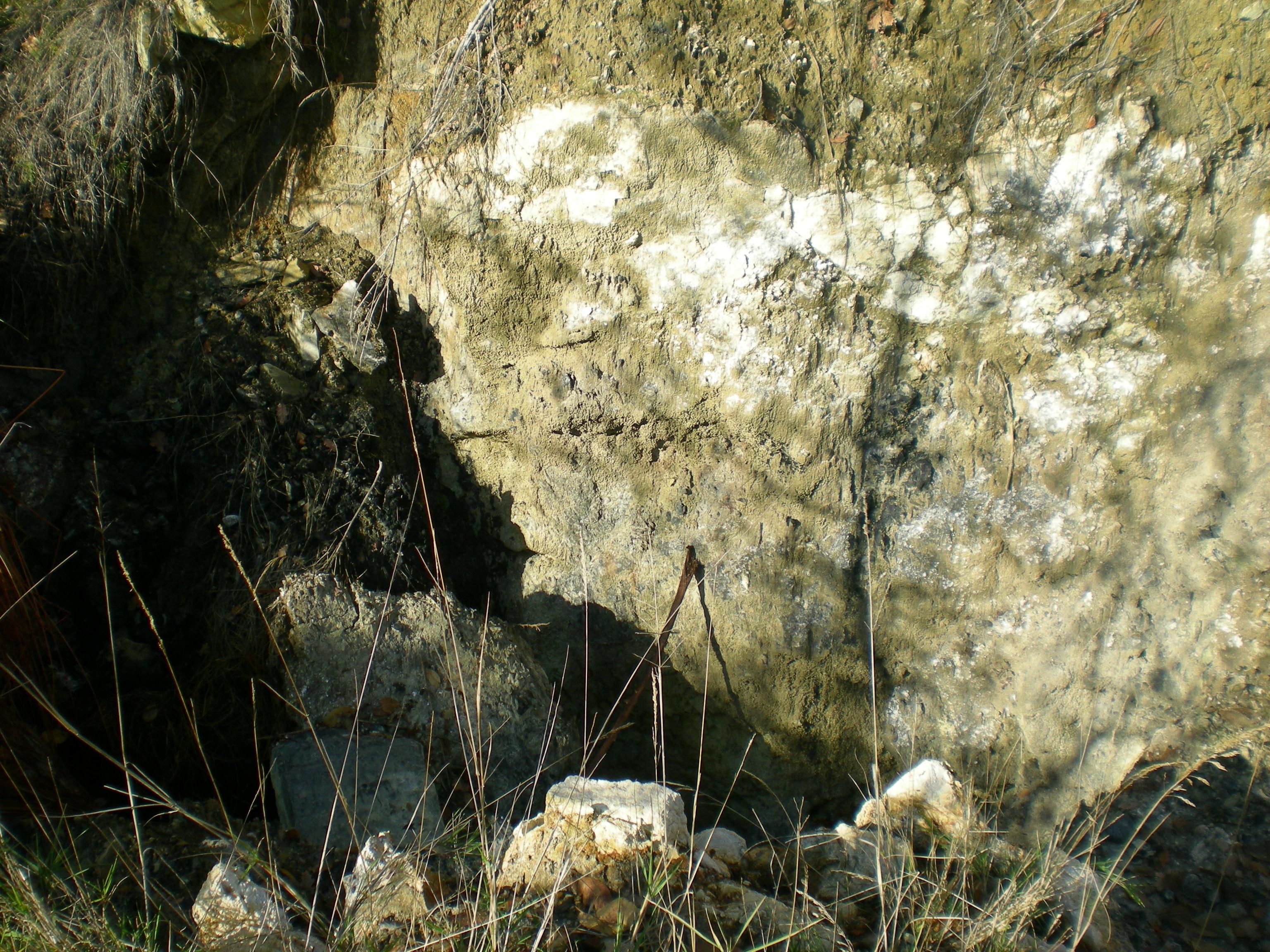 Mofeta sulla provinciale per oliveto (lato sinistro)